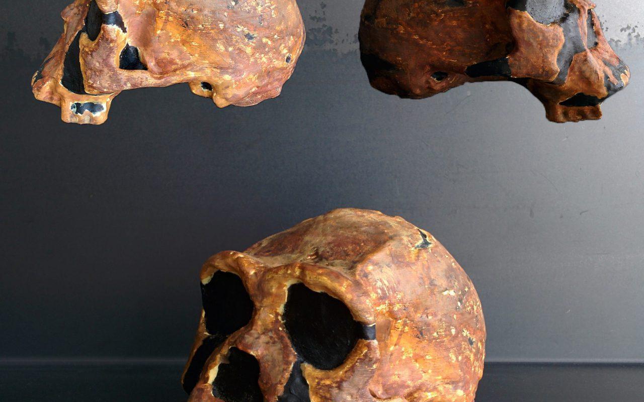 homoerectus (1)